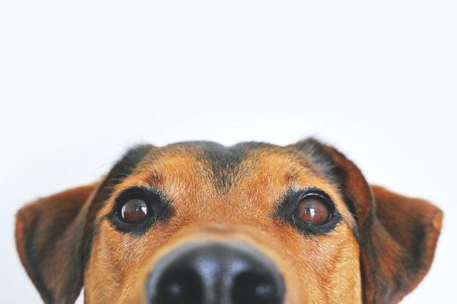 Zbilansowana dieta psa – co warto wiedzieć?