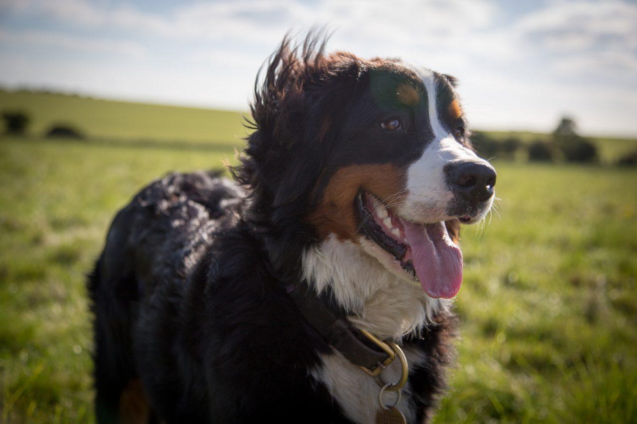 Jak dobrze zadbać o psią sierść?