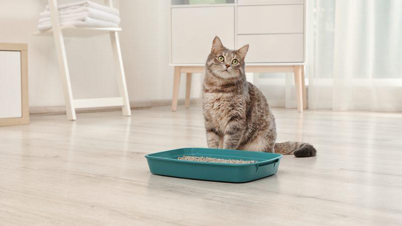 Nauka czystości kota