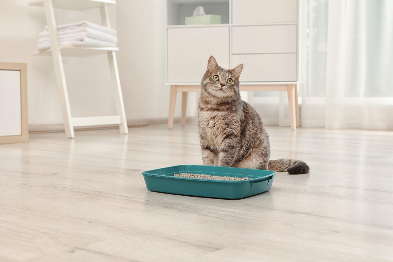 Nauka czystości kota – poznaj podstawy!