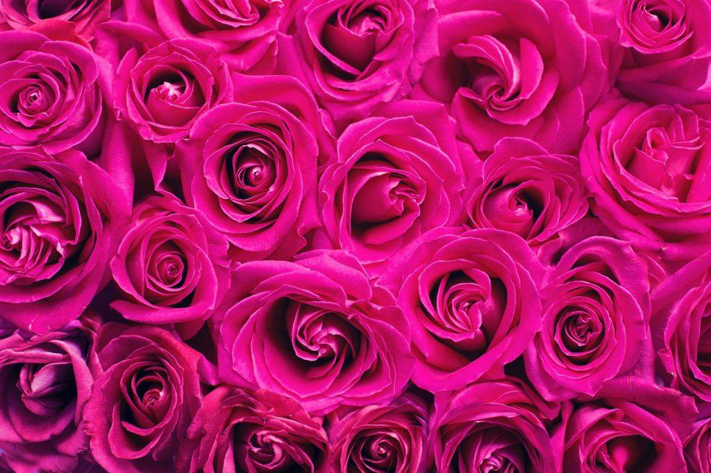 kolory róż różowe