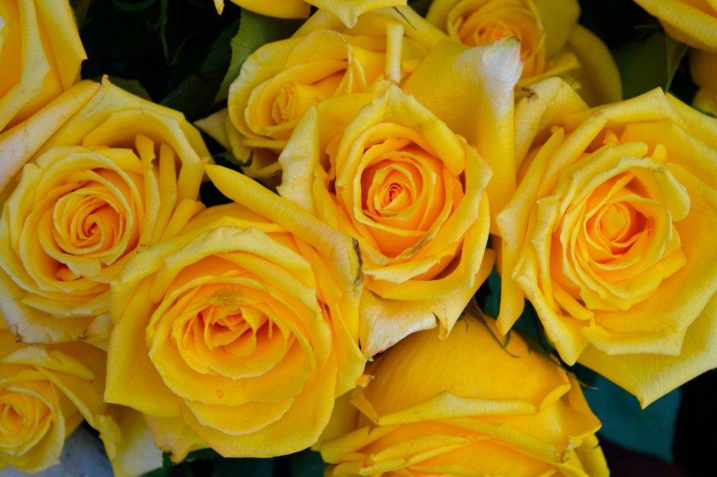 kolory róż żółte